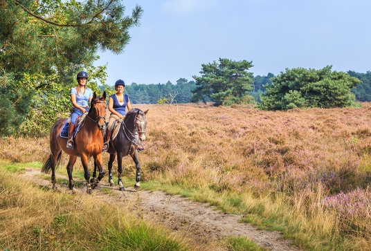 Paardrijden in Bosland
