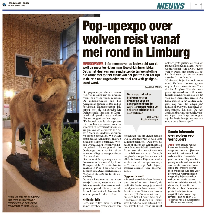 Vanaf Mei Pop Up Expo Wolven In Limburg Bosland Het