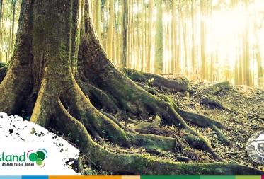 Op stap in Bosland - Historie van het bos