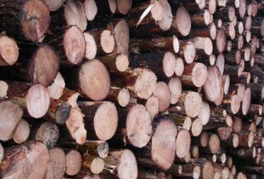 Duurzaam beheer van Overpeltse bossen beloond met FSC-label