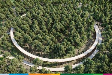 Fietsen door de bomen in Bosland