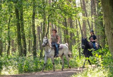 Paardrijden in Lommel