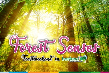 Forest Senses Feestweekend in Bosland
