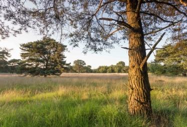 Op stap in Bosland: Winterwandeling op het plat
