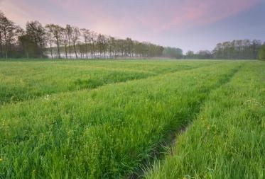 Op stap in Bosland: Klimaatwandeling