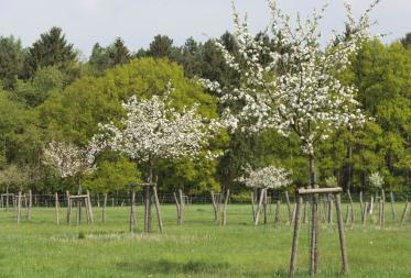 Op stap in Bosland: lente op het Hobos