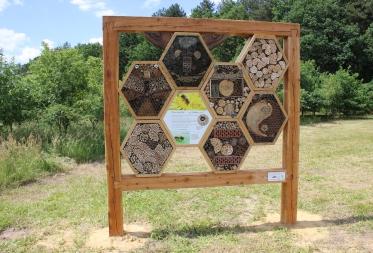 Oog in oog met wilde bijen op de Resterheide