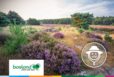 Op stap in Bosland: Ontdek de schatten van de Grote Heide