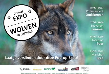 Vanaf mei Pop-up Expo 'Wolven in Limburg'