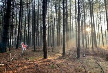 Theaterwandeling 'De vos in het bos'
