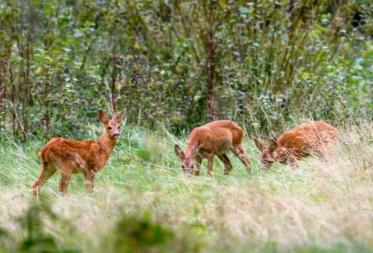 Wilddetectiesysteem in Bosland