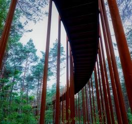 Fietsen door de Bomen in Bosland © Toerisme Limburg