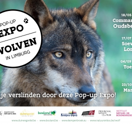 Pop-up Expo Wolven in Limburg - Bosland
